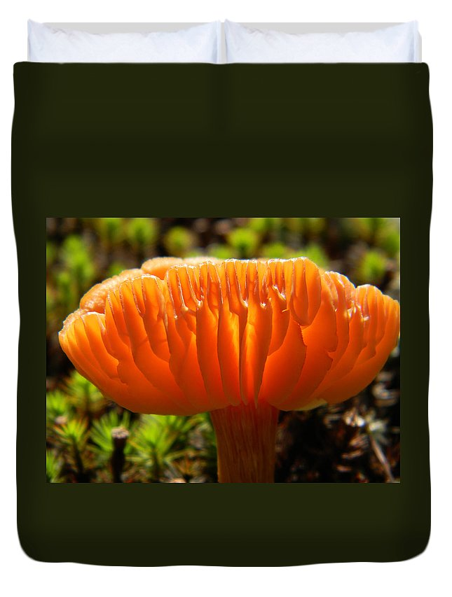 Mushroom Duvet Cover featuring the photograph Orange Glow by Elaine Mikkelstrup