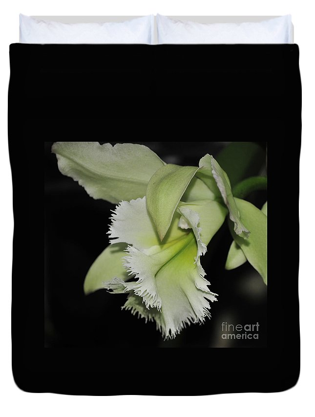 Orchid Duvet Cover featuring the photograph orchid 900 Brassolaeliocattleya Ruben's Verde Chantilly Green by Terri Winkler