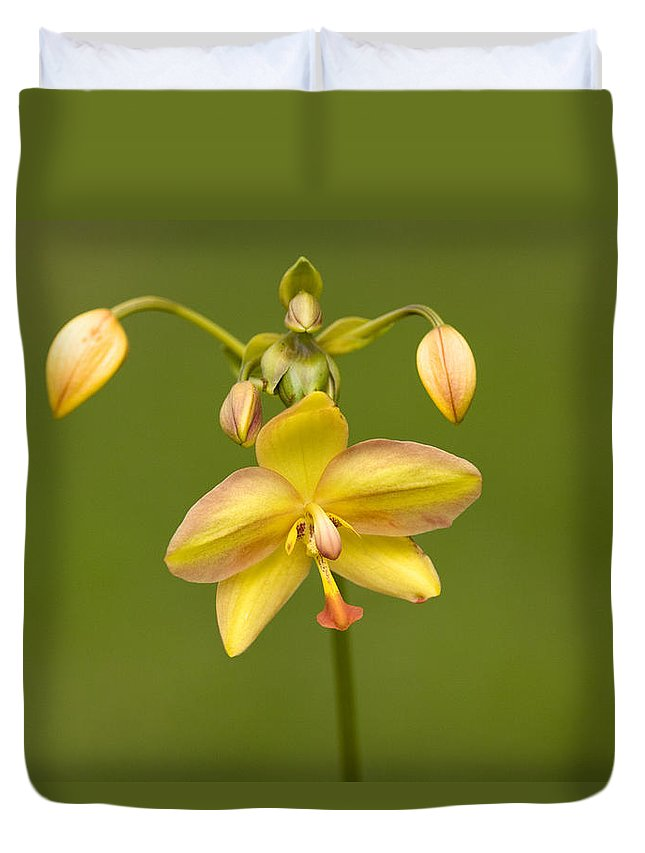 Orchid Duvet Cover featuring the photograph Orchid Number 1 by Rich Franco