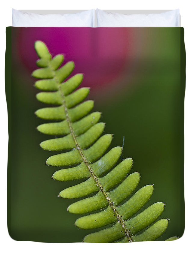 Heiko Duvet Cover featuring the photograph Ornamental Fern by Heiko Koehrer-Wagner