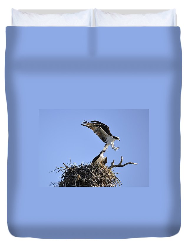Osprey Duvet Cover featuring the photograph Osprey Coming in for a Landing by Christine Stonebridge