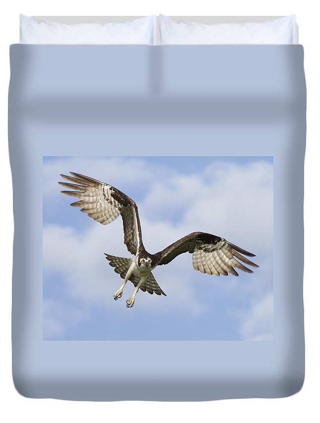 Florida Duvet Cover featuring the photograph Osprey In Flight One by Bill Swindaman