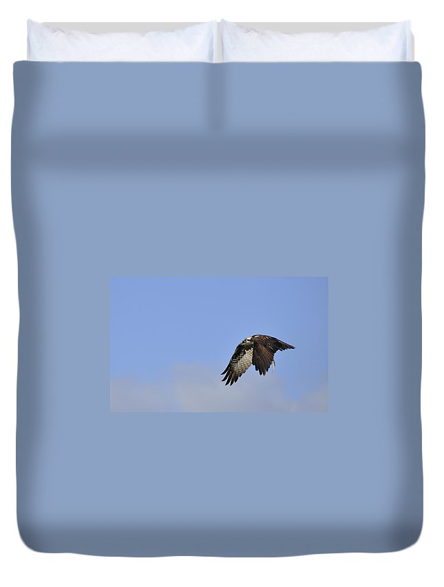 Osprey Duvet Cover featuring the photograph Osprey On The Move by Christine Stonebridge