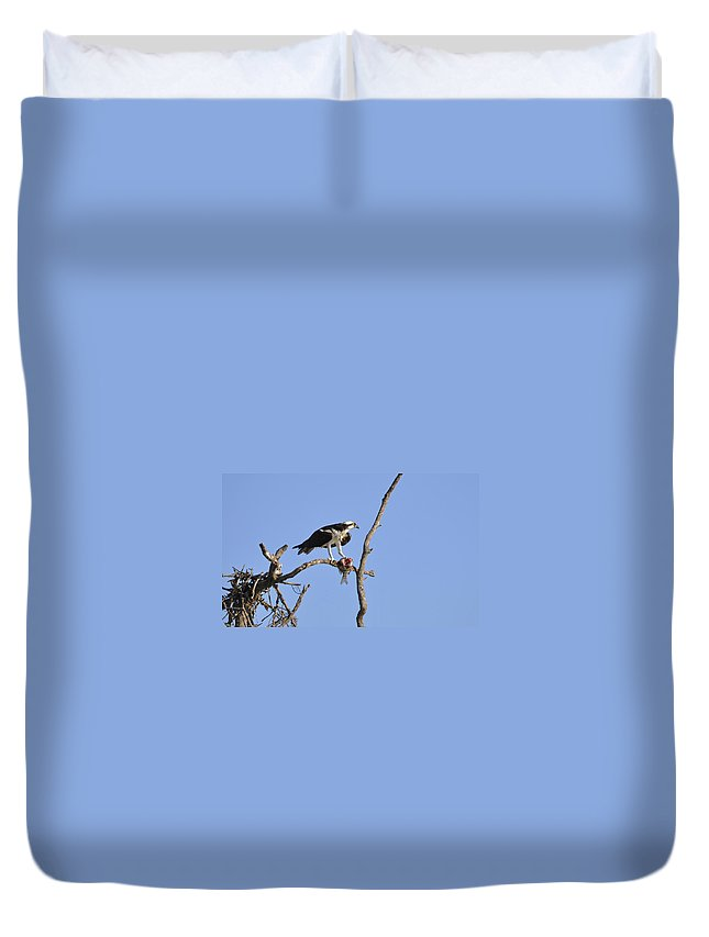 Osprey Duvet Cover featuring the photograph Osprey with Catch II by Christine Stonebridge