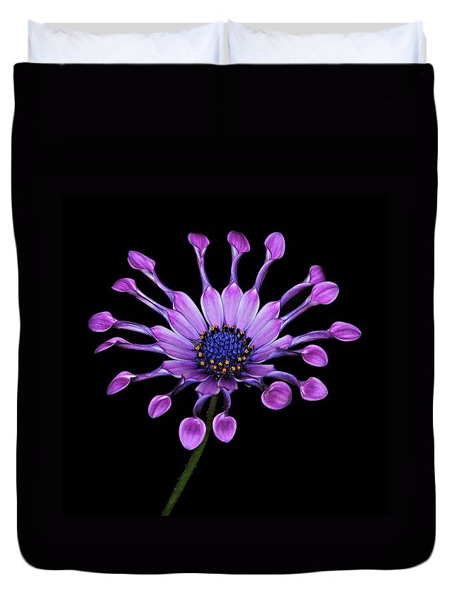Osteospermum Duvet Cover featuring the photograph Osteospermum by Dave Mills