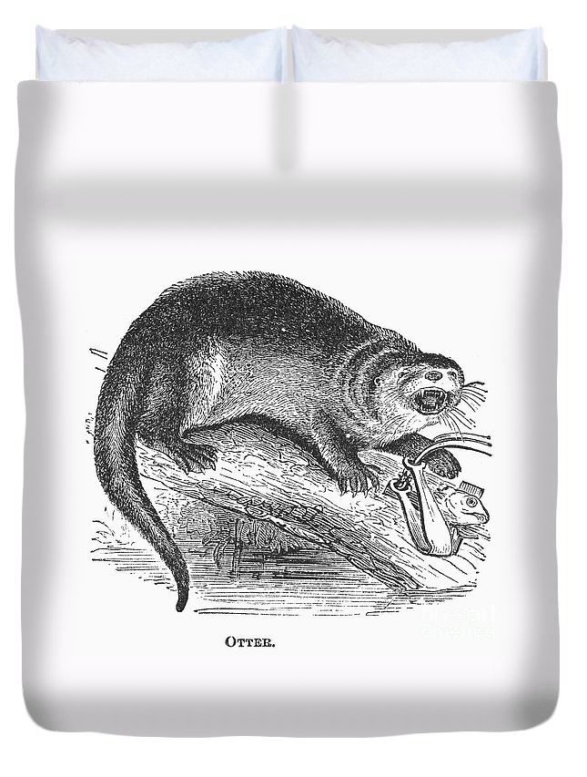 1873 Duvet Cover featuring the photograph Otter, 1873 by Granger