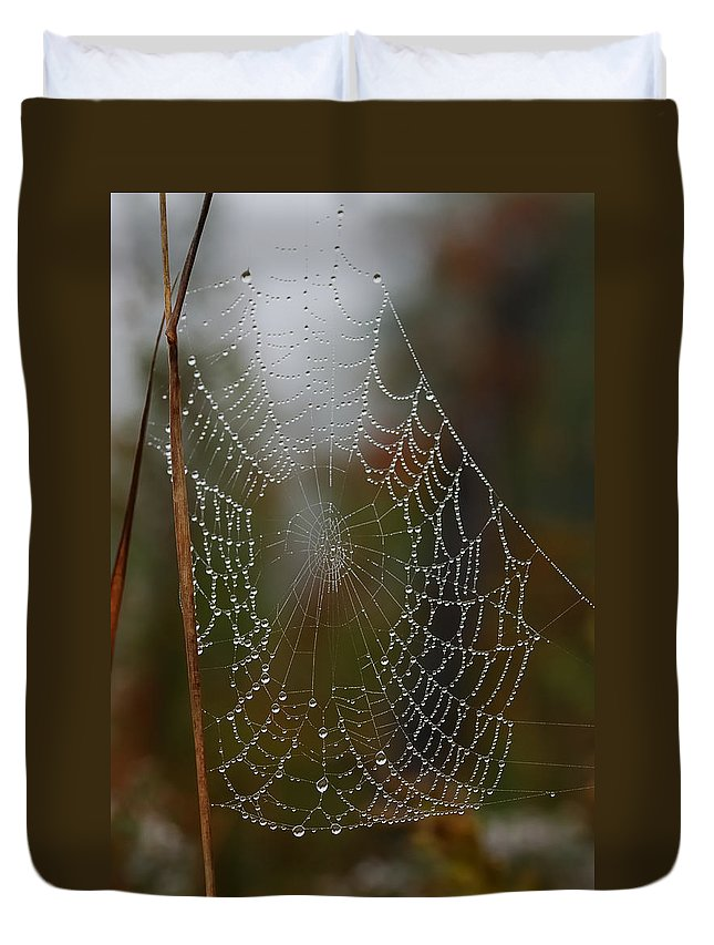 Designs Similar to Out In The Morning Dew