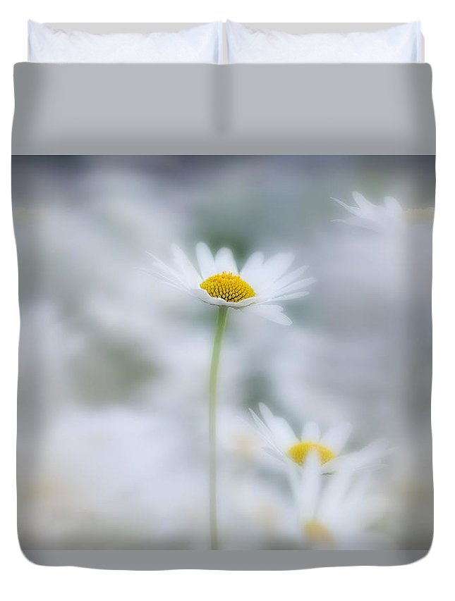 Light Duvet Cover featuring the photograph Ox-eyed Daisies, Kootenay National by Darwin Wiggett