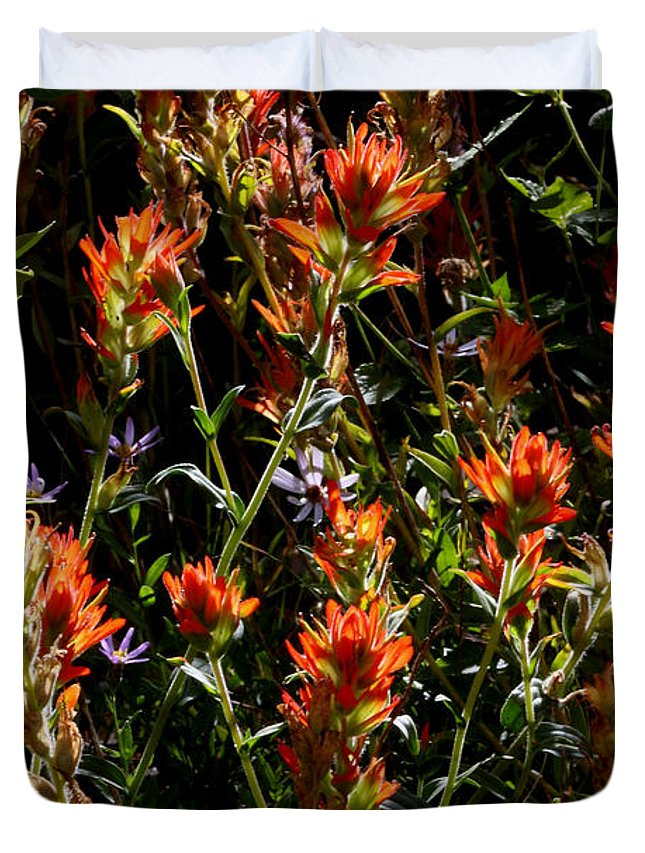 Wildflowers Duvet Cover featuring the photograph Paintbrush by Stephanie Salter