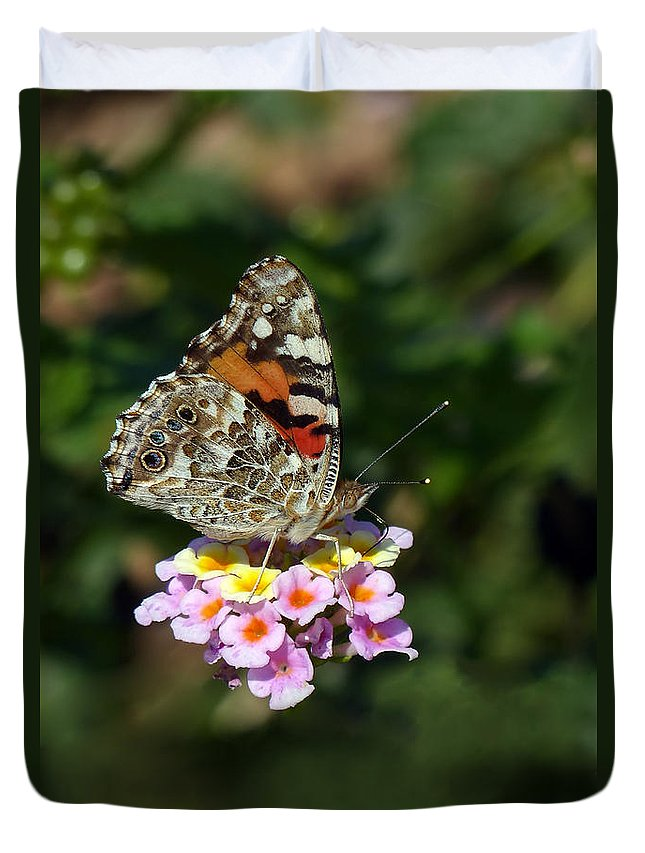 Painted Lady Duvet Cover featuring the photograph Painted Lady by Randall Ingalls