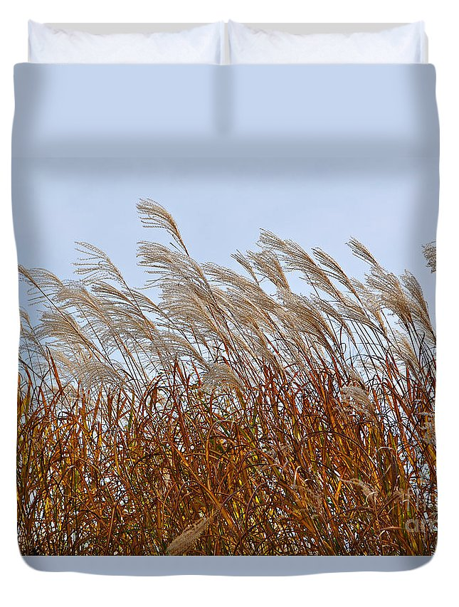 Pampas Grass Duvet Cover featuring the photograph Pampas Grass In The Wind 1 by Mary Machare