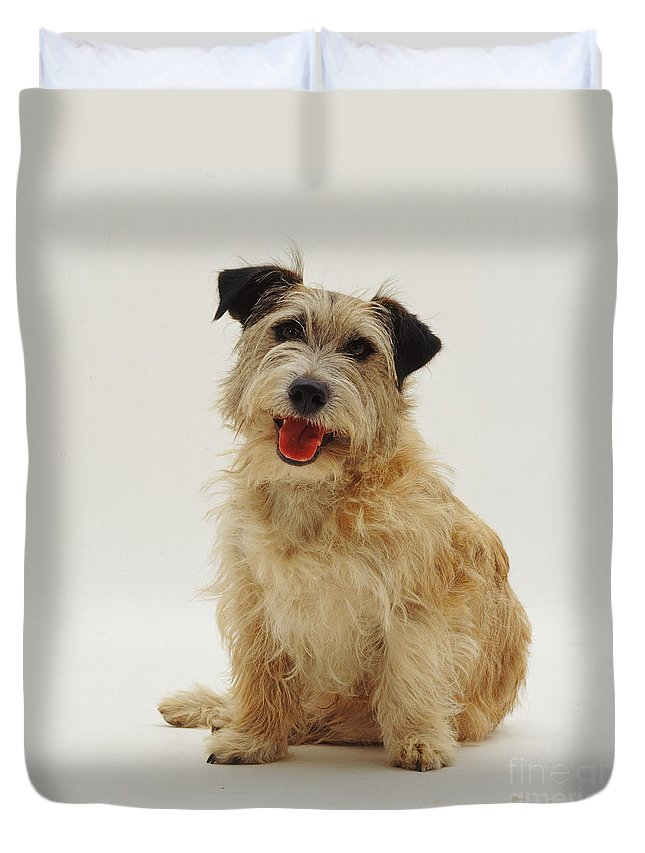 White Background Duvet Cover featuring the photograph Patterdale X Jack Russell Terrier Dog by Jane Burton