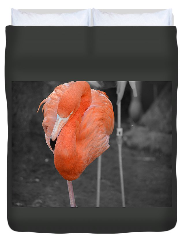 Flamingo Duvet Cover featuring the photograph Peaceful Flamingo by Maggy Marsh