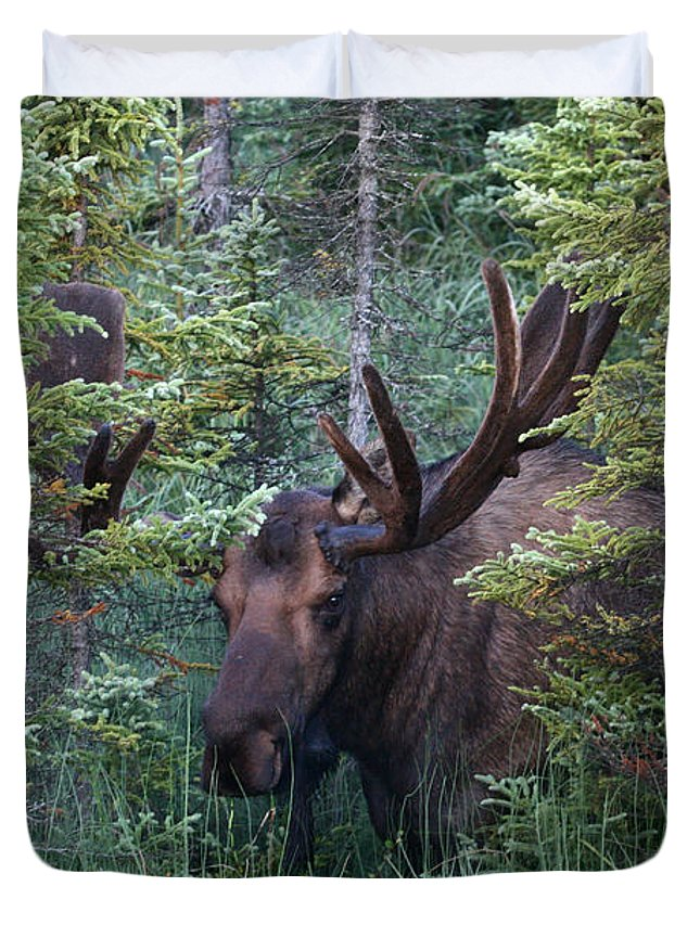 Alaska Duvet Cover featuring the photograph Peeking Through The Spruce by Doug Lloyd