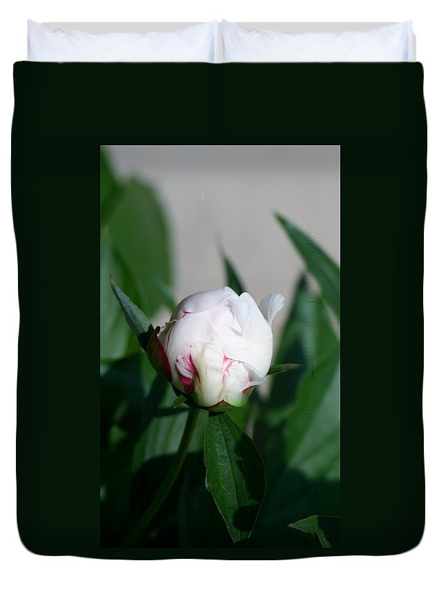 Duvet Cover featuring the photograph Peppermint Peony by Barbara S Nickerson