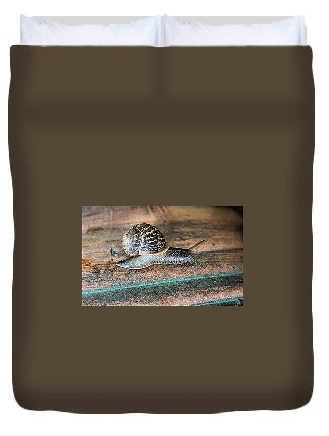 Snail Duvet Cover featuring the photograph Perfect Specimen by Kristin Elmquist