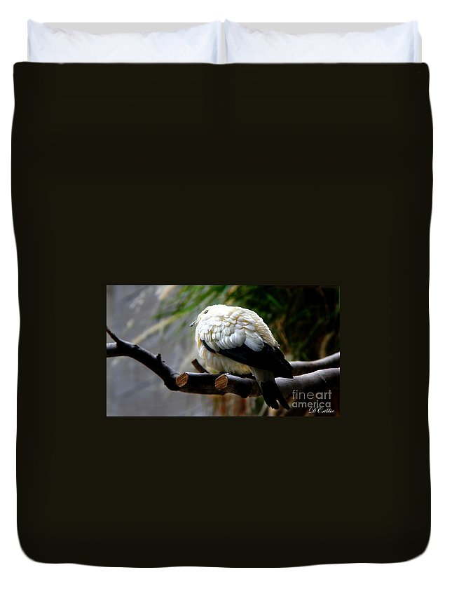 Pigeon Duvet Cover featuring the photograph Pied Imperial Pigeon by Davandra Cribbie