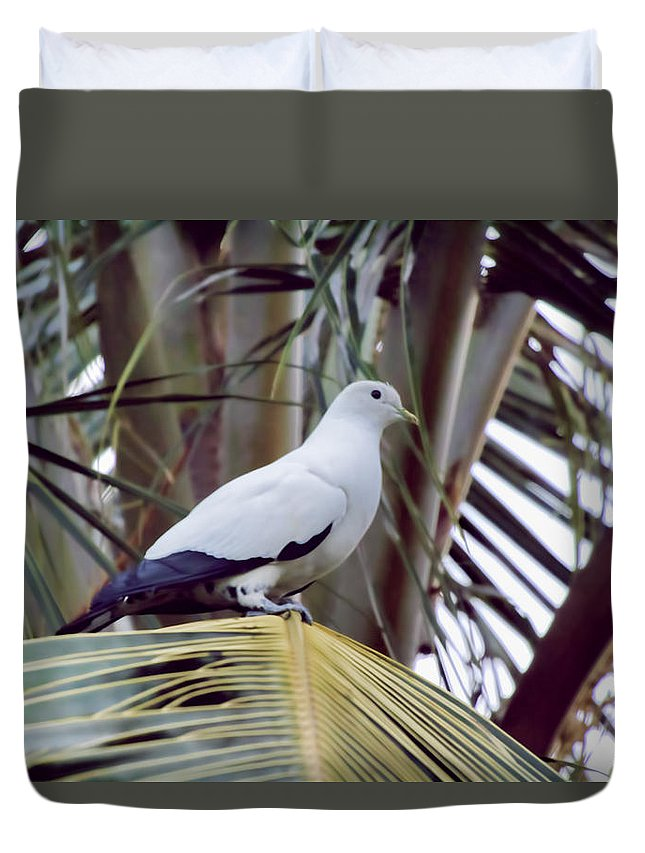 Pied Imperial Pigeon Duvet Cover featuring the photograph Pied Imperial Pigeon by Douglas Barnard