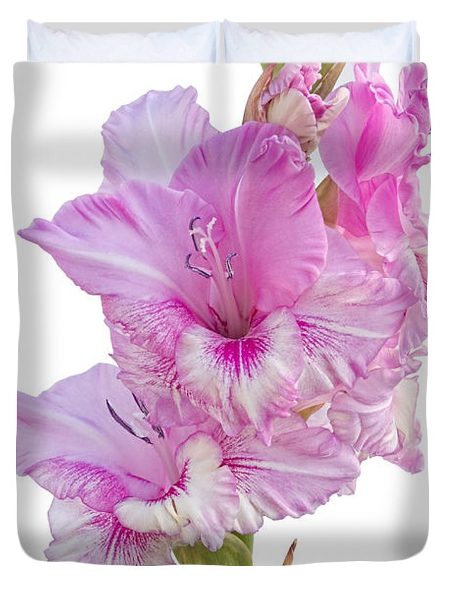 Gladiolus Duvet Cover featuring the photograph Pink Gladiolus by Ann Garrett