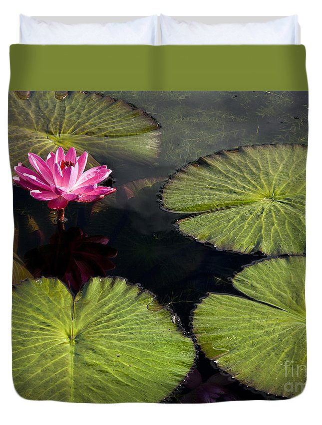 Water Llilies Duvet Cover featuring the photograph Pink Water Lily I by Heiko Koehrer-Wagner