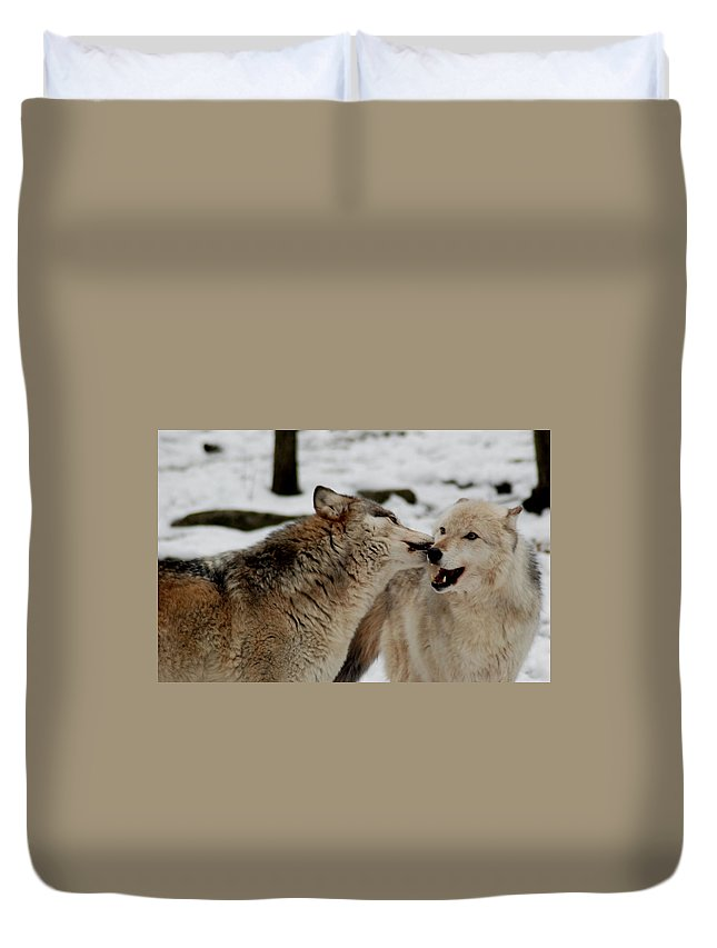 Wolf Duvet Cover featuring the photograph Playful Wolves by Richard Bryce and Family