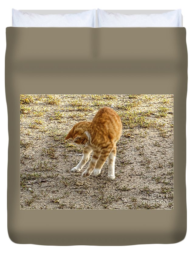Nature Duvet Cover featuring the photograph Playful Yellow Kitty by Debbie Portwood
