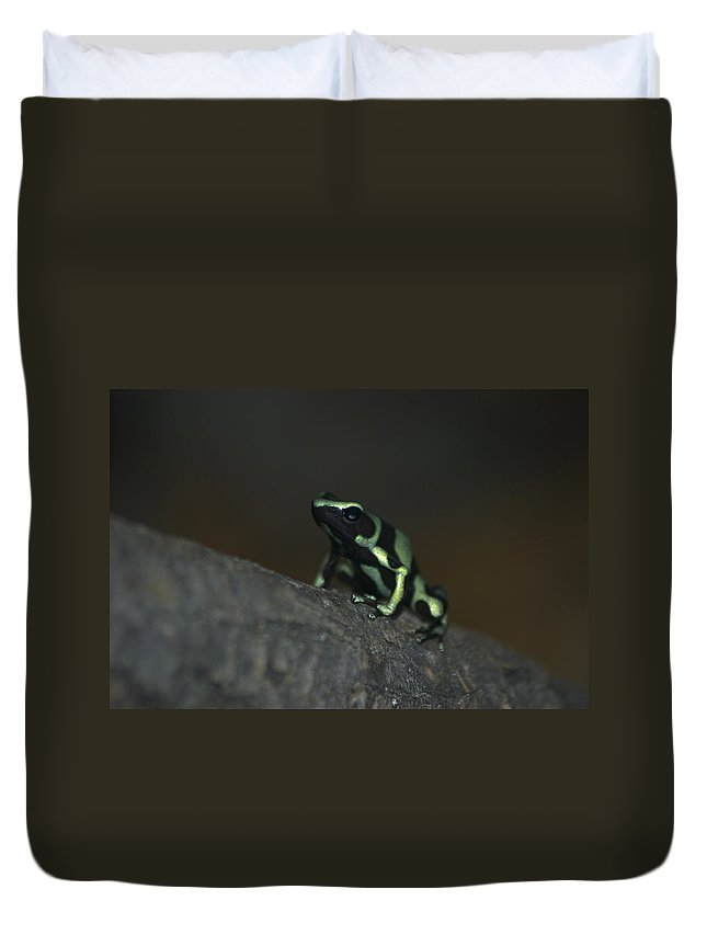 Animals Duvet Cover featuring the digital art Poisonous Green Frog 03 by Thomas Woolworth