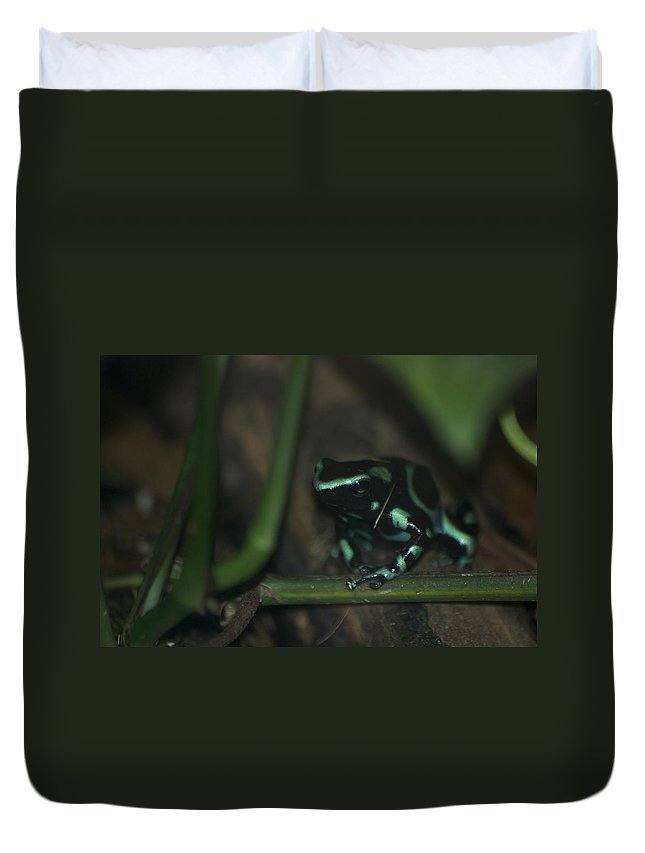 Animals Duvet Cover featuring the digital art Poisonous Green Frog 04 by Thomas Woolworth