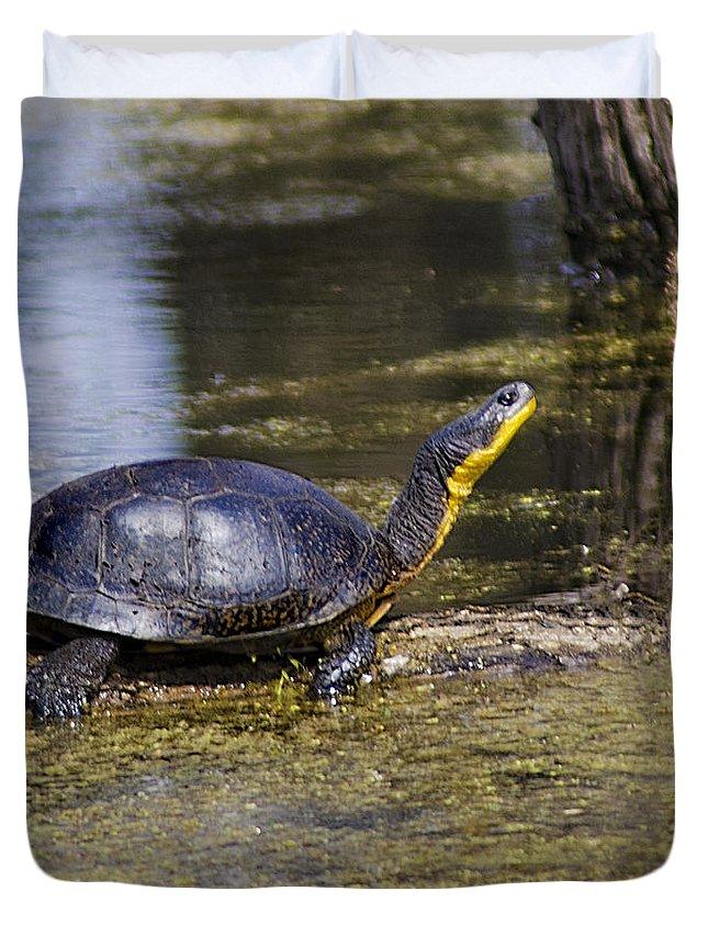 Usa Duvet Cover featuring the photograph Pond Turtle Basking In The Sun by LeeAnn McLaneGoetz McLaneGoetzStudioLLCcom
