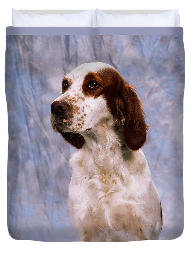 Animals Duvet Cover featuring the photograph Portrait Of Irish Red And White Setter by The Irish Image Collection