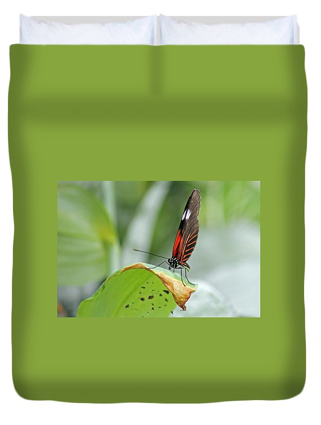 Insects Duvet Cover featuring the photograph Postman Butterfly by Tony Murtagh