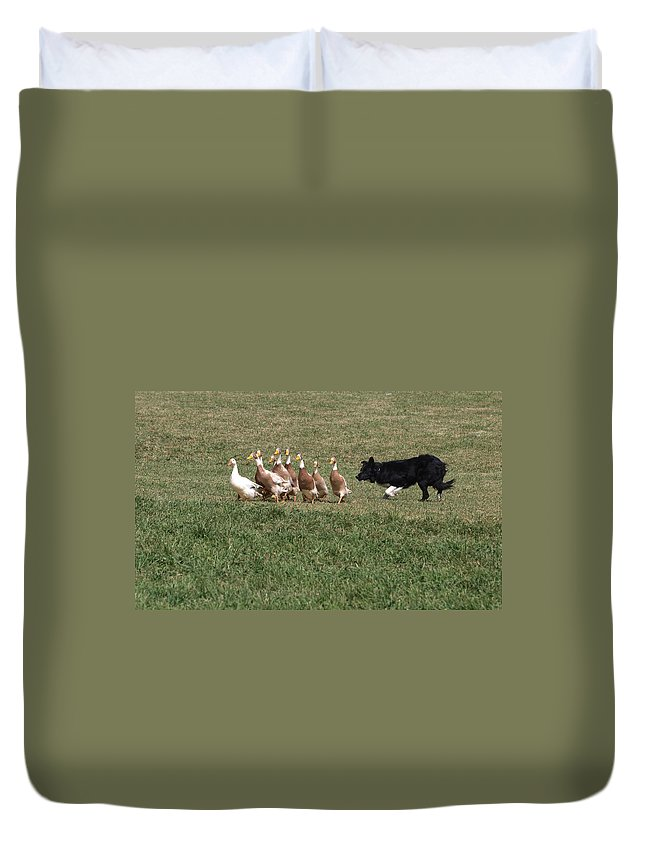 Sheepdog Duvet Cover featuring the photograph Practice Makes Perfect by Joshua House