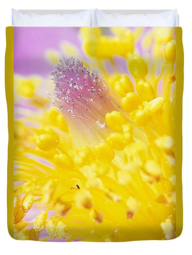 Light Duvet Cover featuring the photograph Prairie Crocus Anemone Patens by Robert Postma
