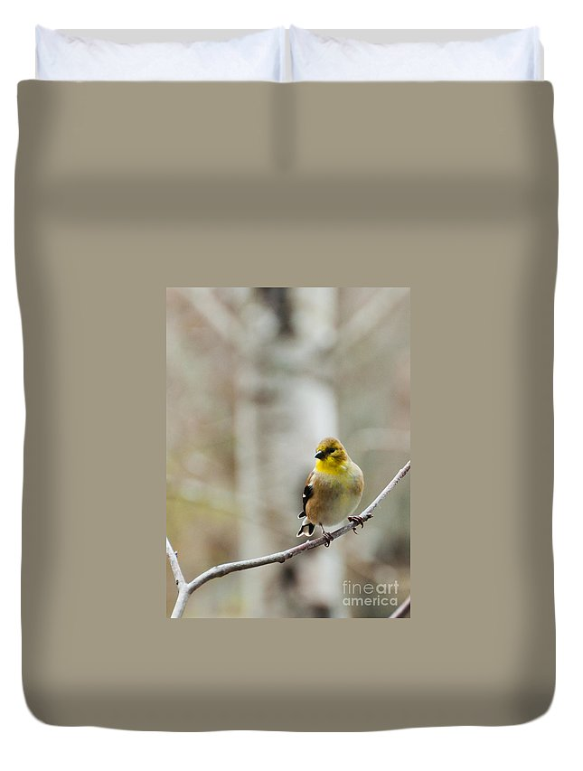 Finch Duvet Cover featuring the photograph Pretty Finch by Cheryl Baxter