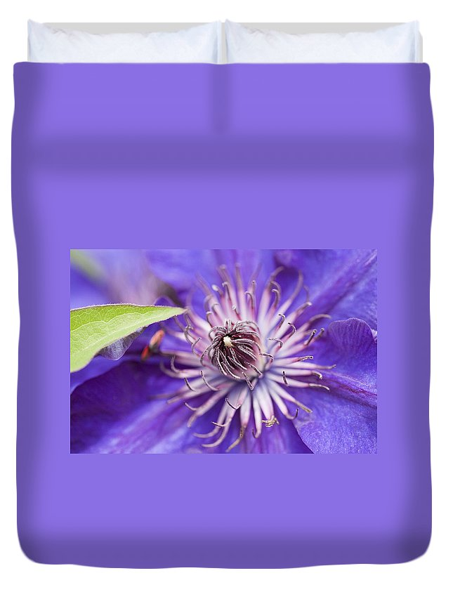 Clematis Duvet Cover featuring the photograph Pretty Purple Clematis by Kathy Clark