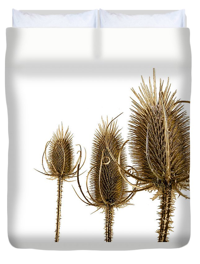 Art Duvet Cover featuring the photograph Prickly Teasels On White by Randall Nyhof