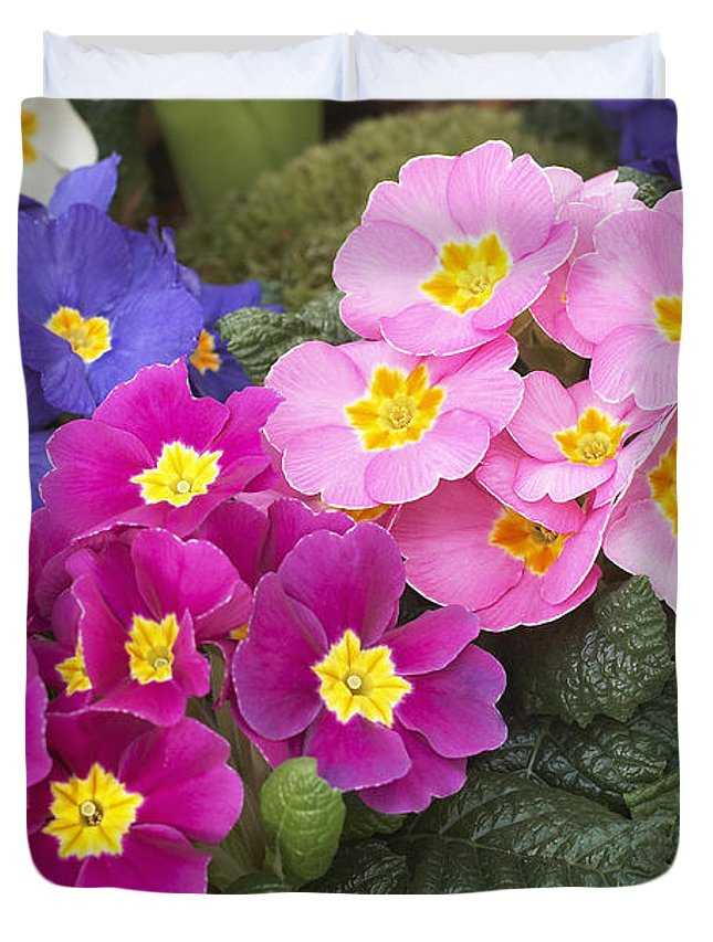 Vp Duvet Cover featuring the photograph Primrose Primula Sp Flowers by VisionsPictures