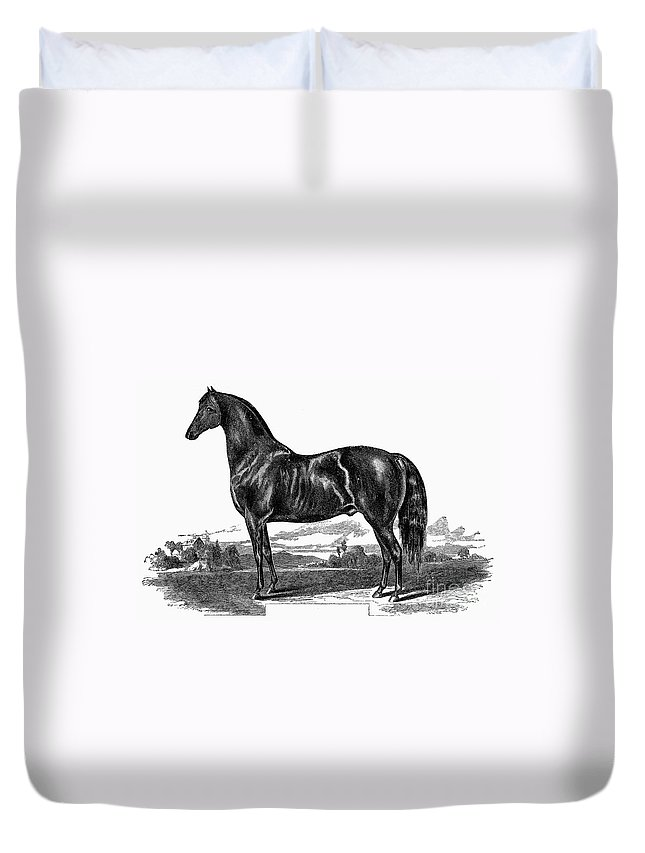 1857 Duvet Cover featuring the photograph Prize Horse, 1857 by Granger