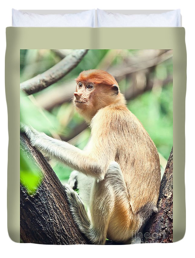 Proboscis Duvet Cover featuring the photograph Proboscis Monkey by MotHaiBaPhoto Prints