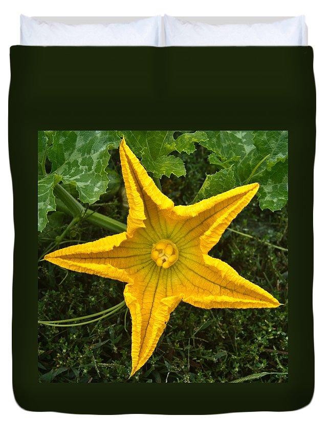 Pumpkin Duvet Cover featuring the photograph Pumpkin Flower 1 by Douglas Barnett