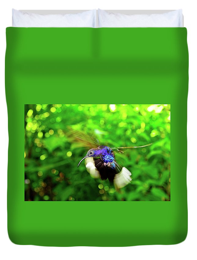 Hummingbird Photographs Duvet Cover featuring the photograph Purple And Blue Hummingbird by Harry Spitz