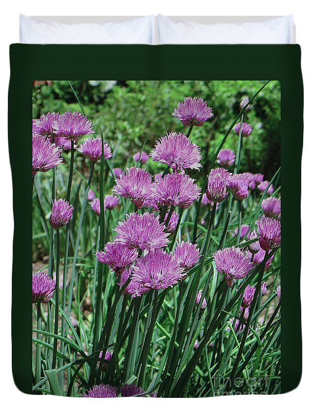 Star Photographs Duvet Cover featuring the photograph Purple Spikes by Art Dingo