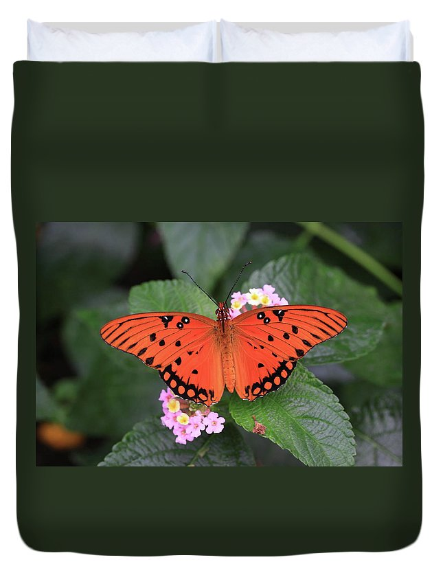 Queen Butterfly Duvet Cover featuring the photograph Queen Butterfly by Rick Berk