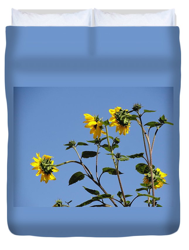 Sunflower Duvet Cover featuring the photograph Quicksilver Sun by Shannon Grissom