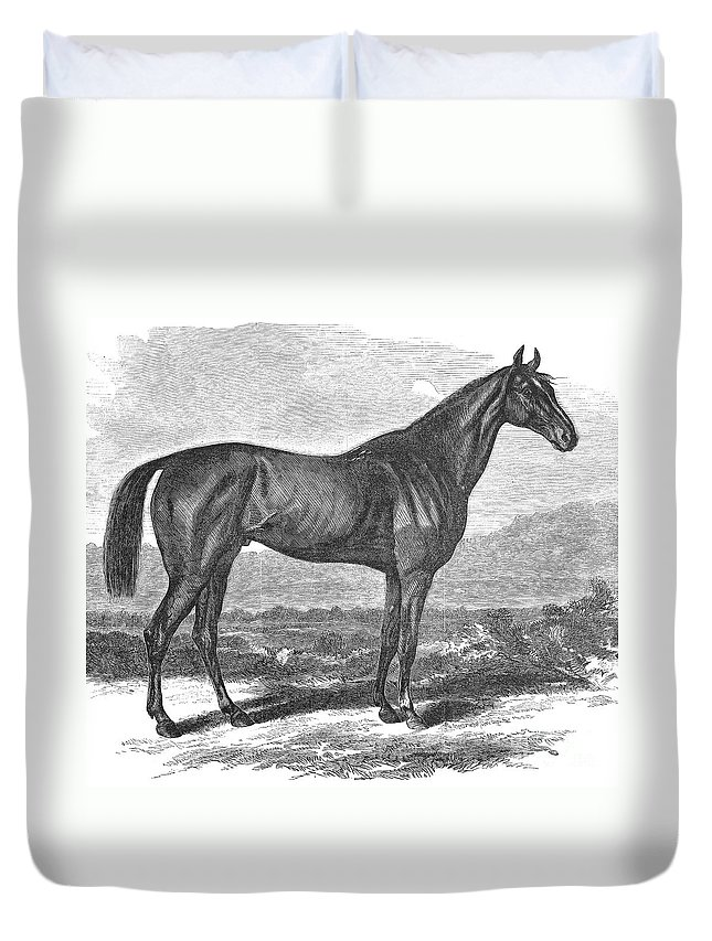 1867 Duvet Cover featuring the photograph Racehorse, 1867 by Granger
