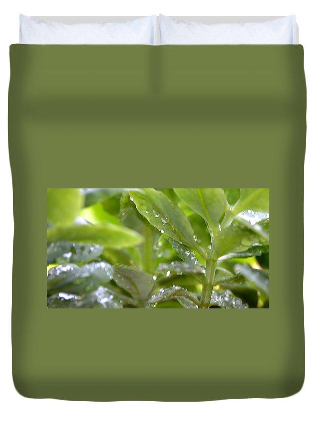 Rain Duvet Cover featuring the photograph Raindrops On Sedum by Maria Urso