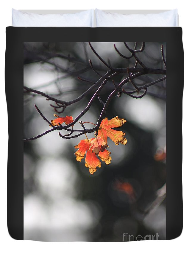 Fall Duvet Cover featuring the photograph Red And Yellow Fall Leave's Closeup by Robert D Brozek