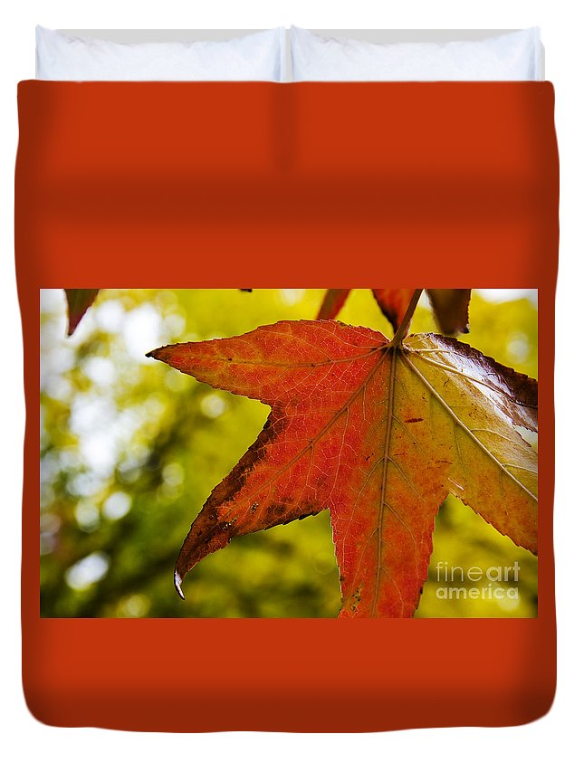 Red Duvet Cover featuring the photograph Red Autumn Leaf by Jim And Emily Bush
