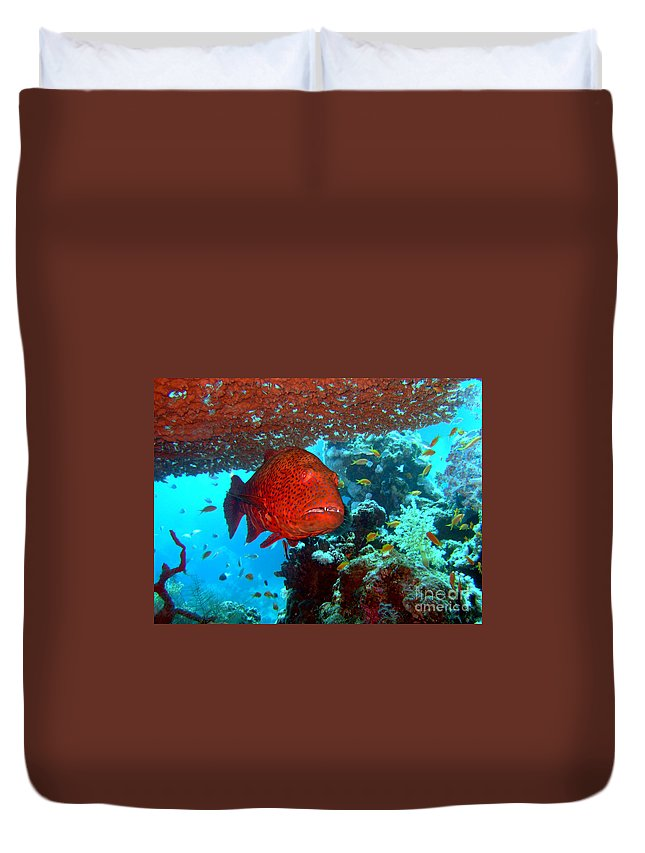 Underwater Duvet Cover featuring the photograph Red Close-up Grouper by MotHaiBaPhoto Prints