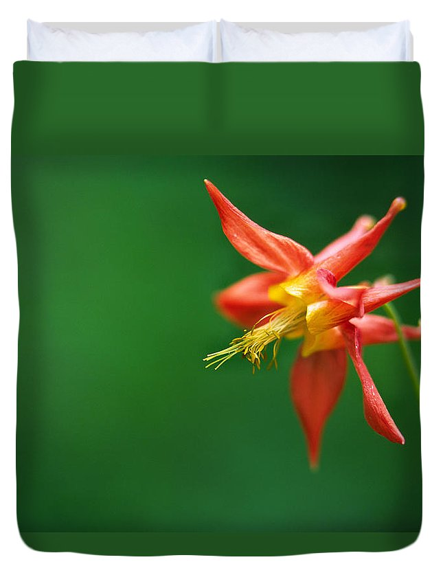 Light Duvet Cover featuring the photograph Red Columbine Aquilegia Formosa by Robert Postma